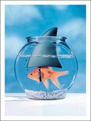 1155 Birthday Card - Goldfish with shark fin (Pack of 50)