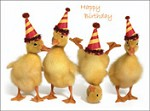 1337 Birthday Card - Four ducks (Pack of 50)