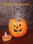 7129 Halloween Card - Cat in pumpkin (Pack of 50)