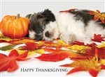 7327 Thanksgiving Card - Puppy sleeps on leaves (Pack of 50)